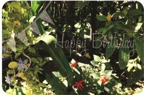 happybirthday5