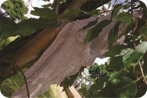 knit leaves scarf