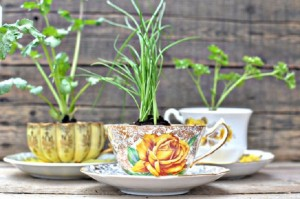 tea-cup-flower-pot